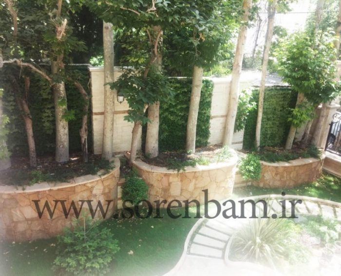 درختان کهنسال|تهیه و کاشت| شرکت سورن بام
