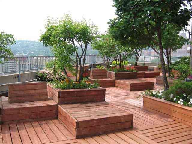 اجرای بام سبز،درختان مناسب برای بام سبز