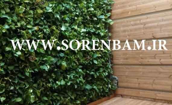 طراح و مجری دیوار سبز طبیعی