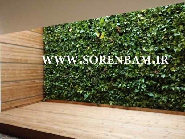 مشاوره طراحی و اجرای دیوار سبز یا باغ عمودی