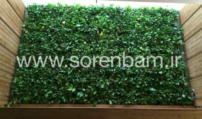 سورن بام|مشاوره طراحی و اجرای دیوار سبز