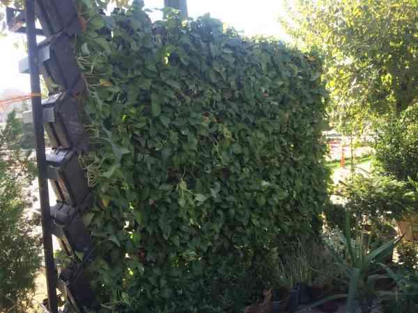 دیوار سبز|انواع دیوار سبز|انواع دیوارهای زنده