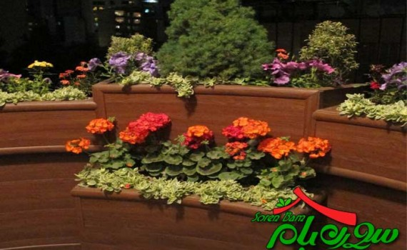 کاشت گیاهان سبز