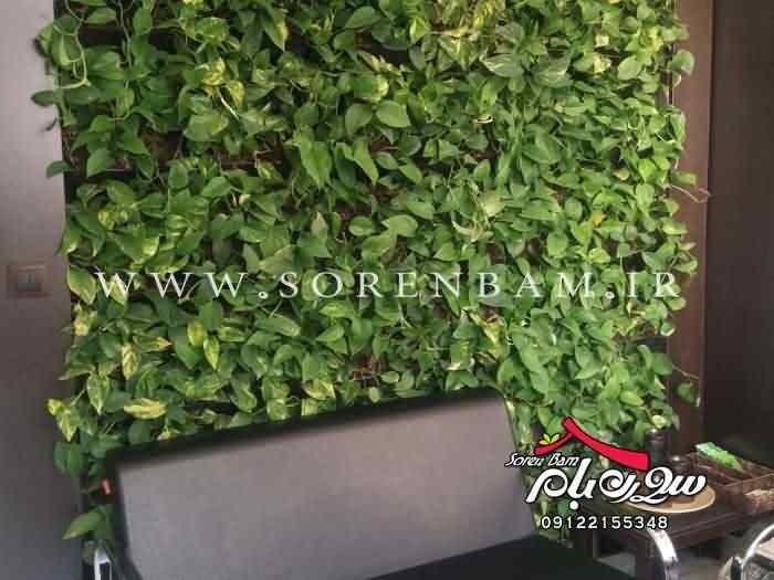 دیوار سبز | اجرای دیوار سبز |نصب دیوار سبز |تولید دیوار سبز
