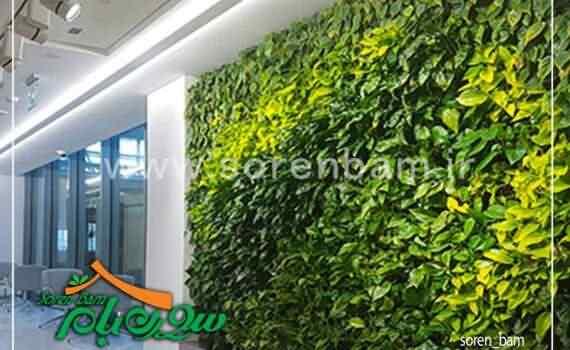 اجرای دیوار سبز تخصصی