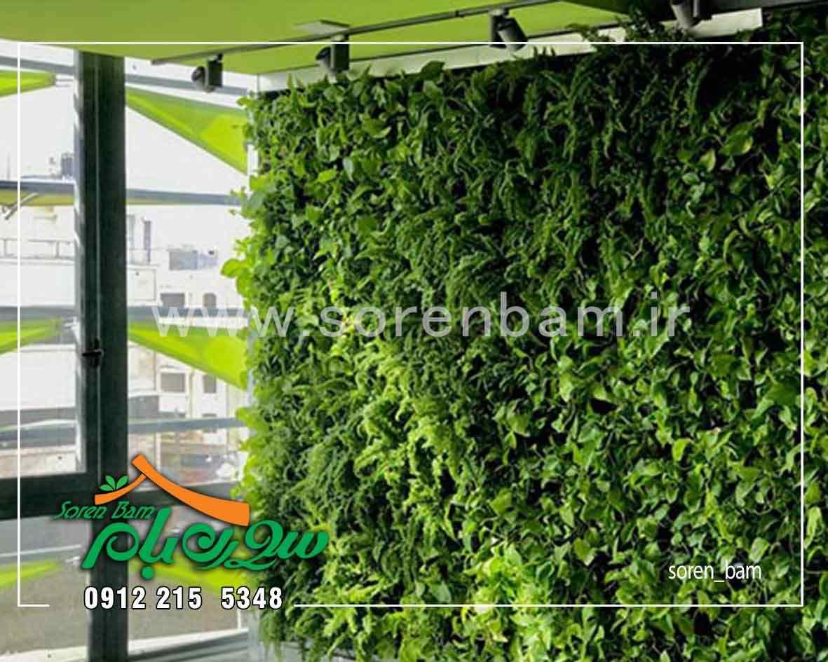 اجرای دیوار سبز هیدرو پونیک