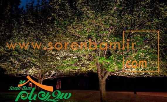 کارهایی که برای جابجایی درخت انجام می شود