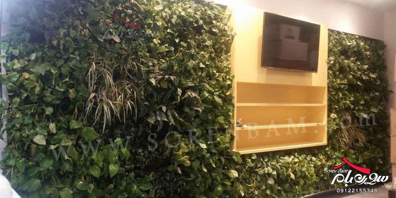 طراحی دیوار سبز|اجرای دیوار سبز|زیبایی بصری دیوار سبز
