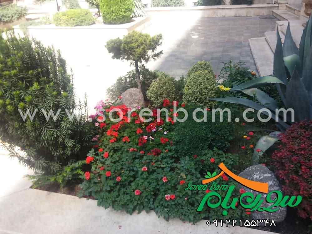 گیاهان سبز مقاوم