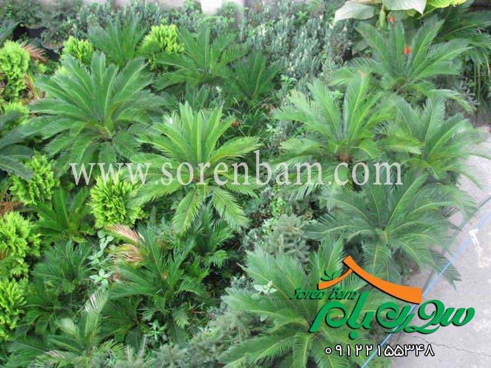 کاشت گیاهان در فضای سبز