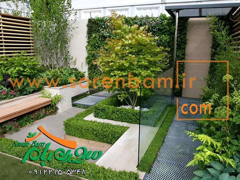 اجرای بام سبز،درختان مناسب