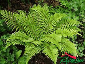 کاشت گیاهان سبز ، فضای سبز