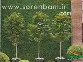 کاشت گیاهان فضای باز