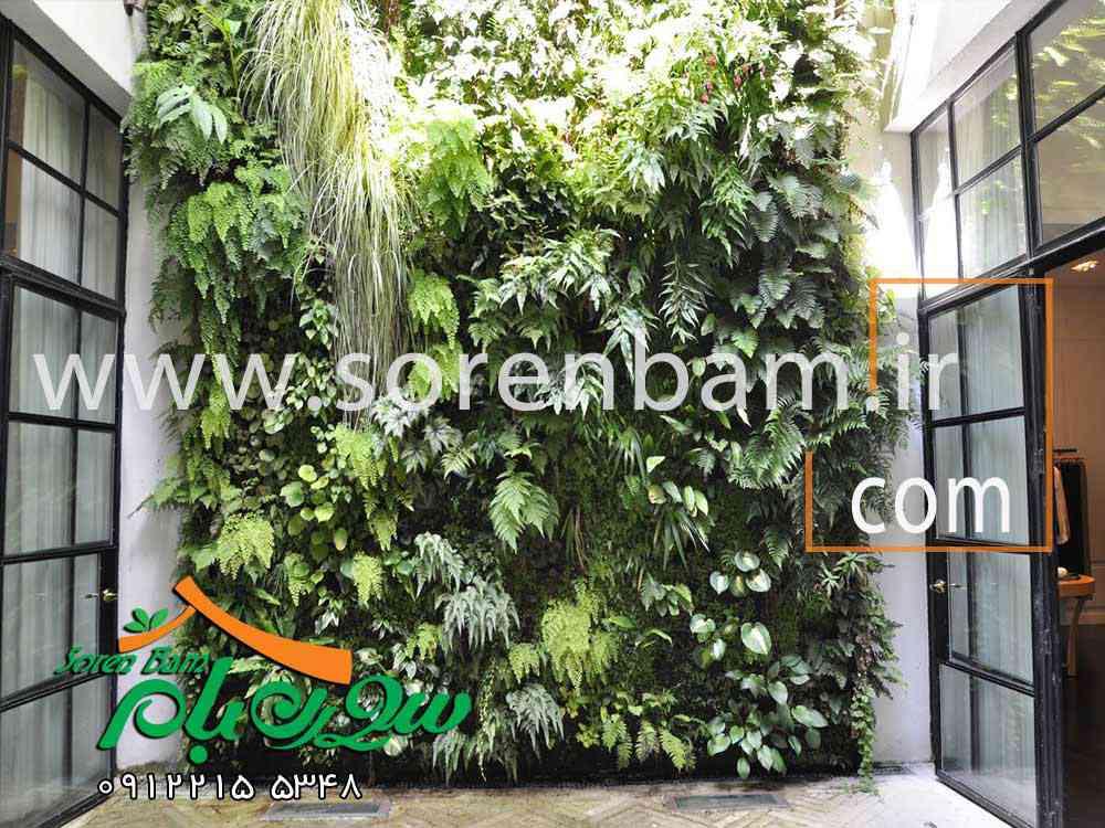 نقش دیوار سبز در توسعه شهری