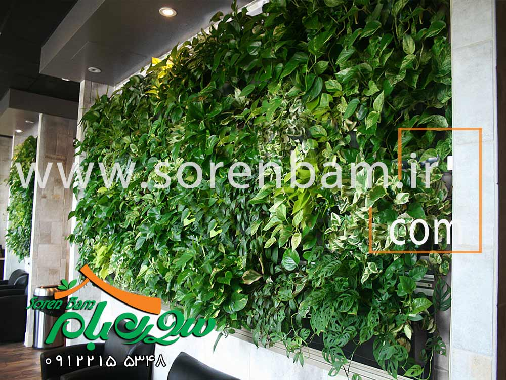 دیوار سبز طبیعی و مصنوعی