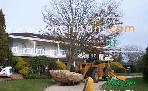روش جابجایی درختان بزرگ وانتقال درختان بزرگ