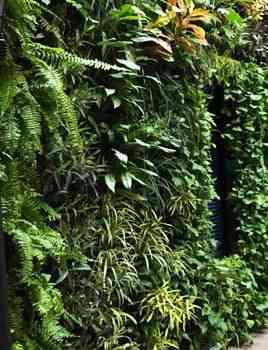 دیوار سبز و گیاهان مناسب