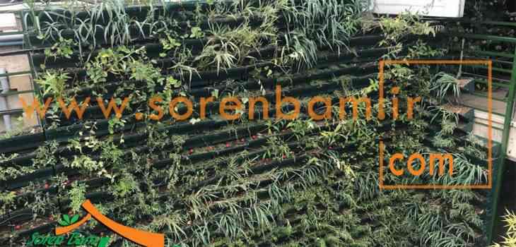 دیوار سبز رستوران فلورانس