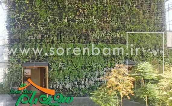 همه چیز درباره دیوار سبز ، فضای سبز