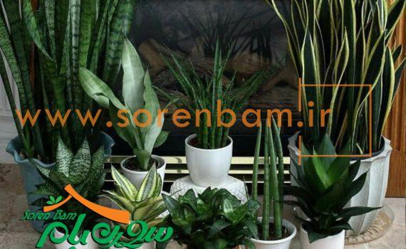 کاشت گیاهان دیوار سبز وآپارتمانی