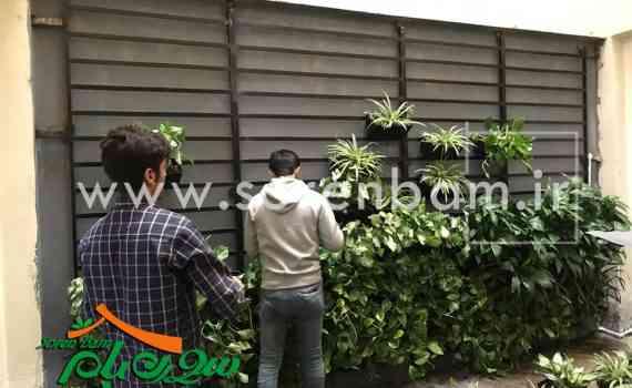 کاشت گیاهان دیوار سبز