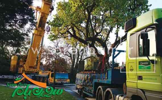 جابجایی درختان و نحوه نگهداری آن