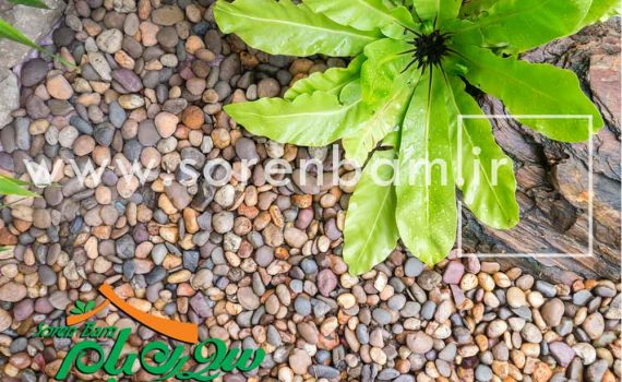 قلوه سنگ رنگی ،رودخانه ای