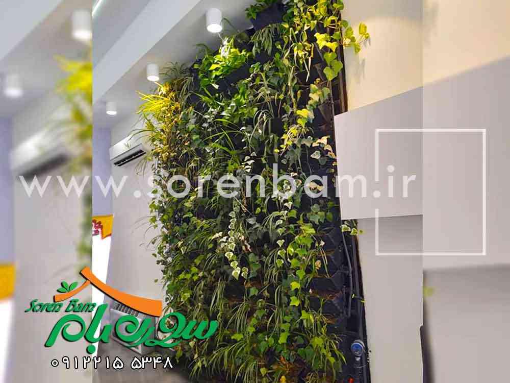 دیوار سبزمدولار، دیوار زنده