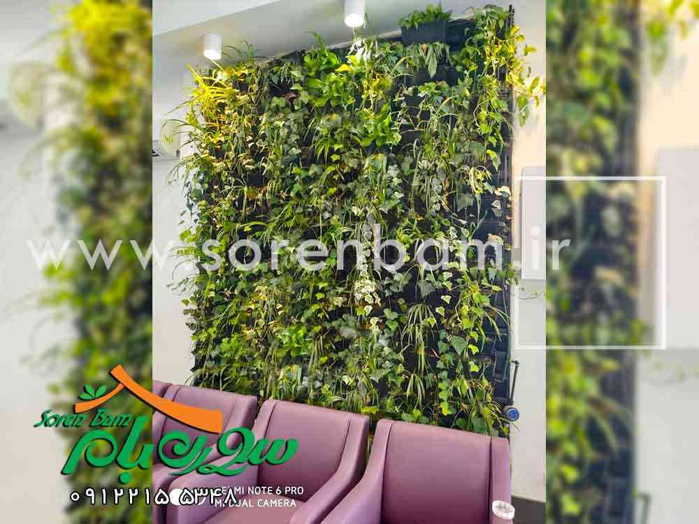 همه چیز در مورد دیوار سبز سورن بام