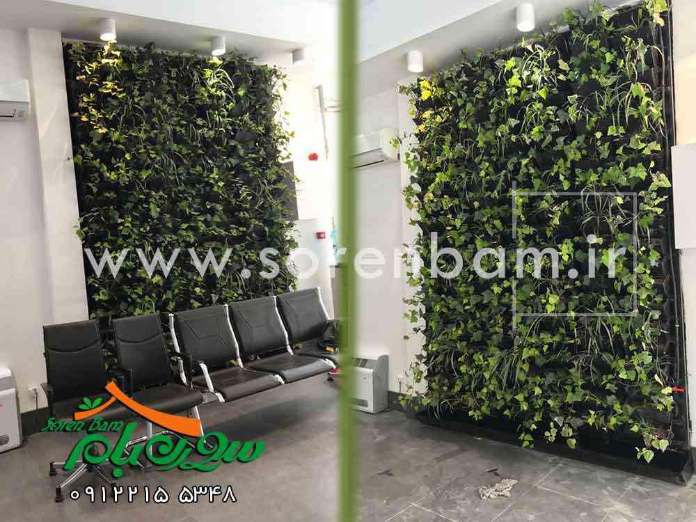 طراح و مجری دیوار سبز