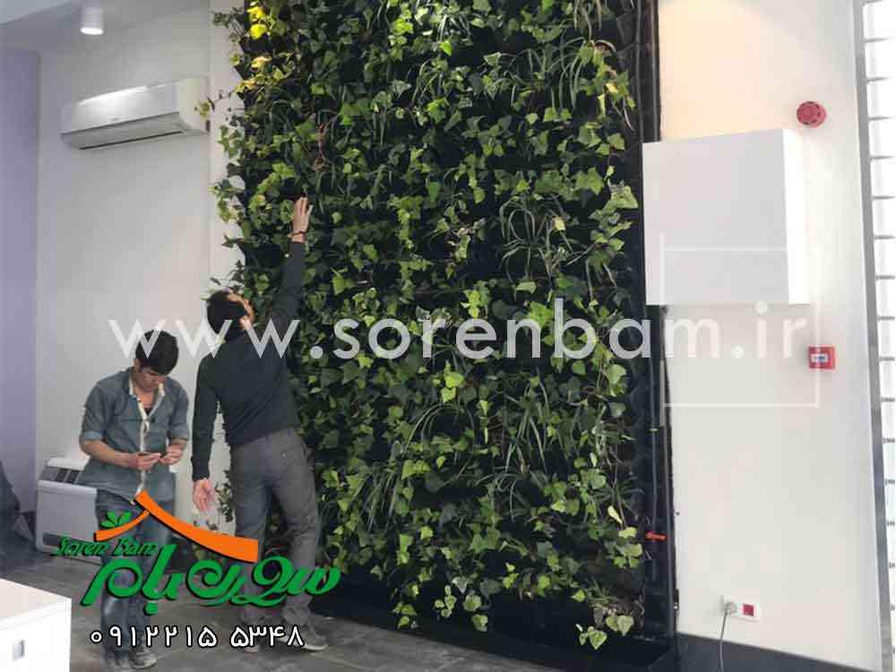 همه چیز درباره دیوار سبز
