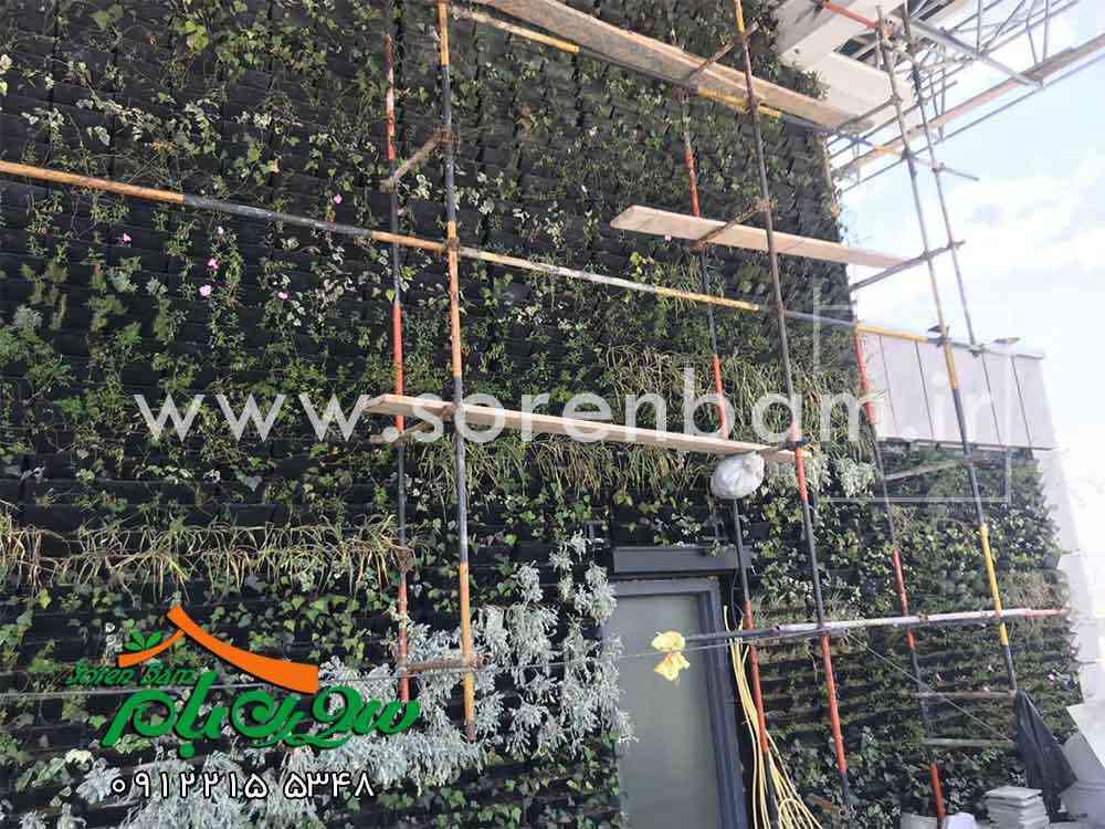 دیوار سبز پروژه گلرنگ