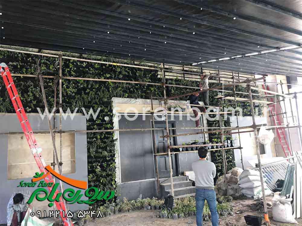 دیوار سبز رستوران سنسو