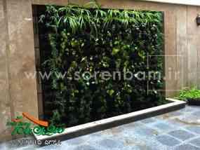 دیوار سبز یا گرین وال و نحوه نگهداری آن