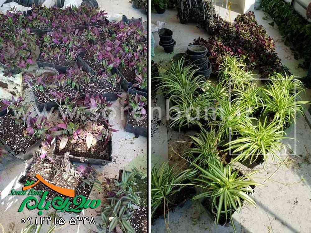 طراحی و کاشت گیاهان فضای سبز