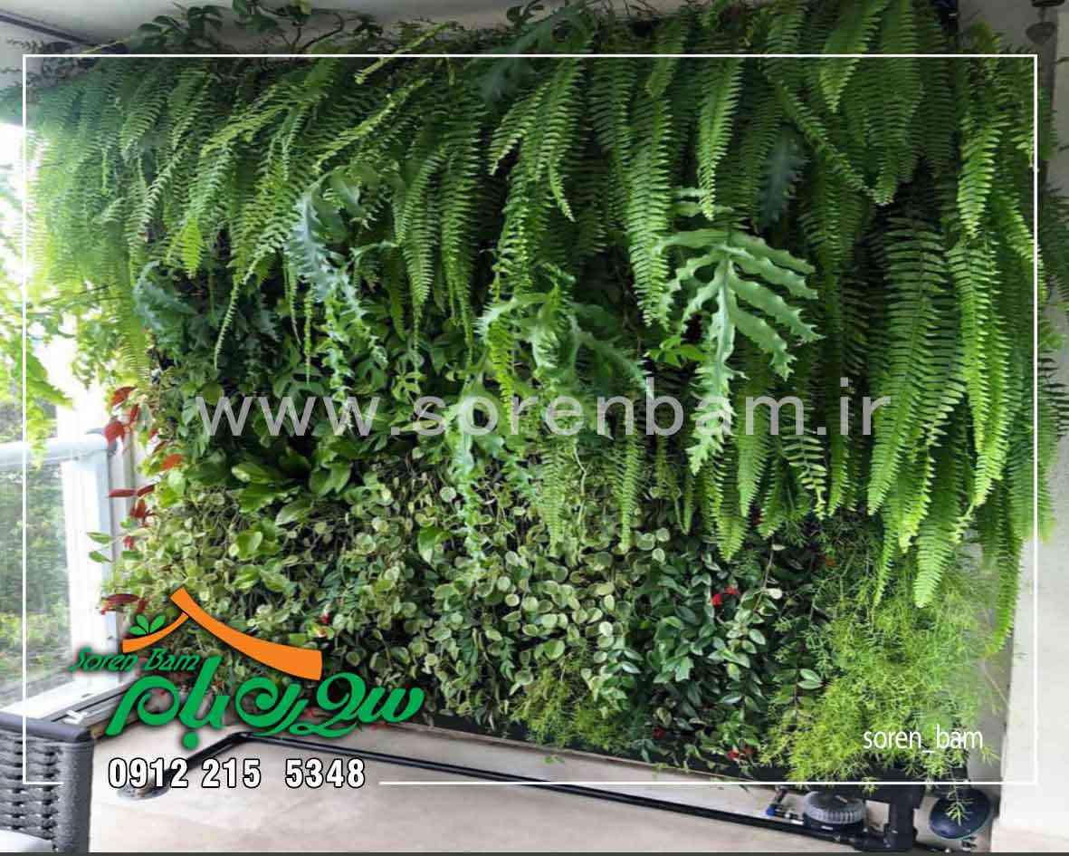 زهکشی بستر خاک در دیوار سبز