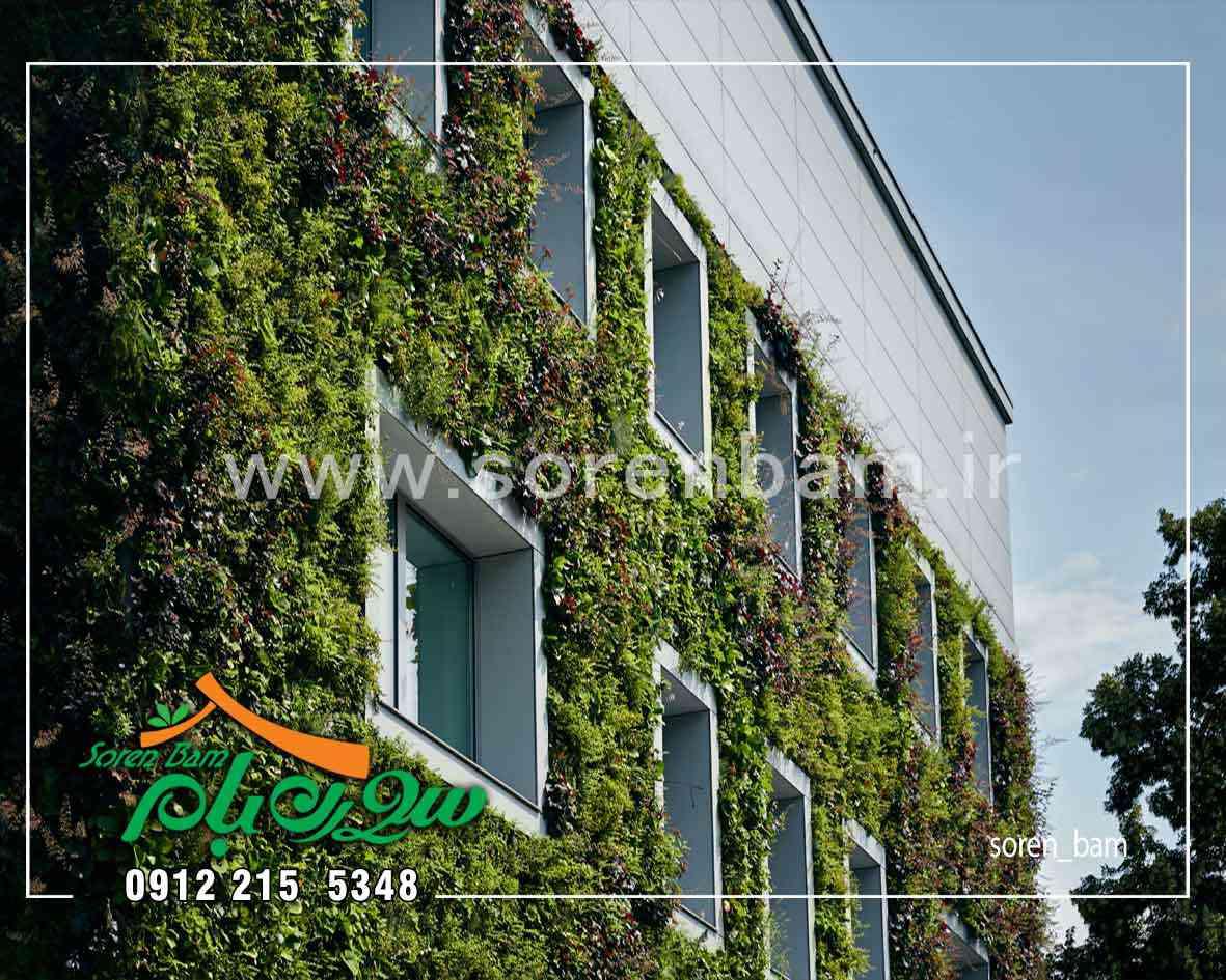 اجرای دیوار سبز طبیعی در نمای ساختمان