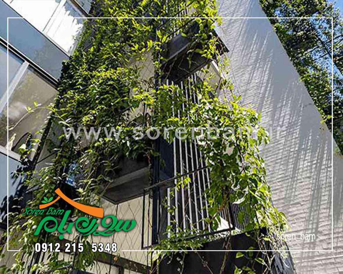 اجرای دیوار سبز طبیعی و فلاورباکس نمای ساختمان
