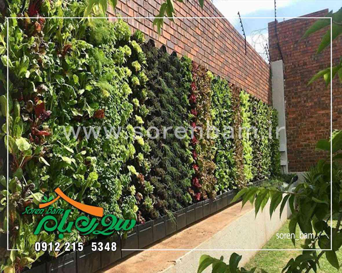 دیوار سبز با گیاهان مختلف در روف گاردن